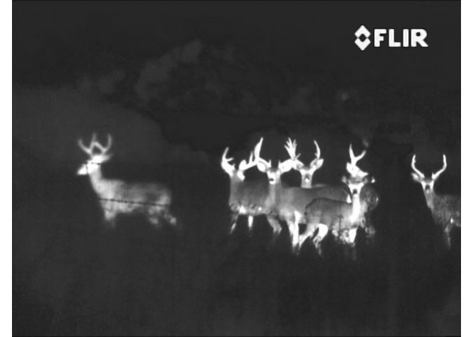 FLIR Thermal Night vision makes use of infrared radiation to see in complete darkness